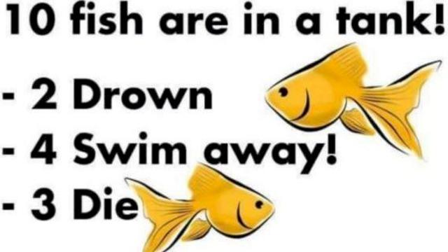Ribe koje se nalaze u akvarijumu